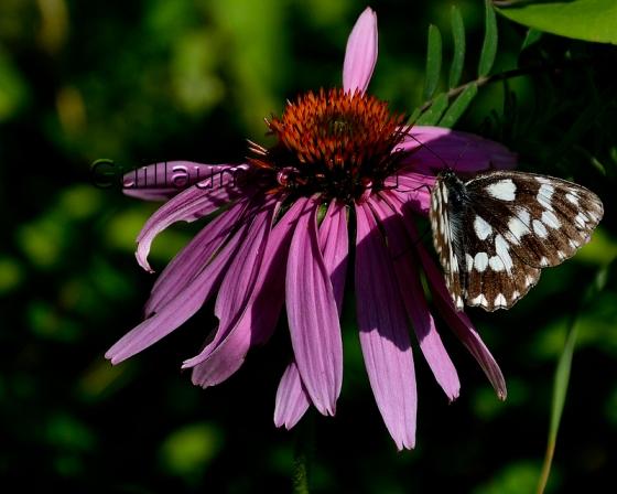 Papillon changement de site internet - Papillon fleur ...