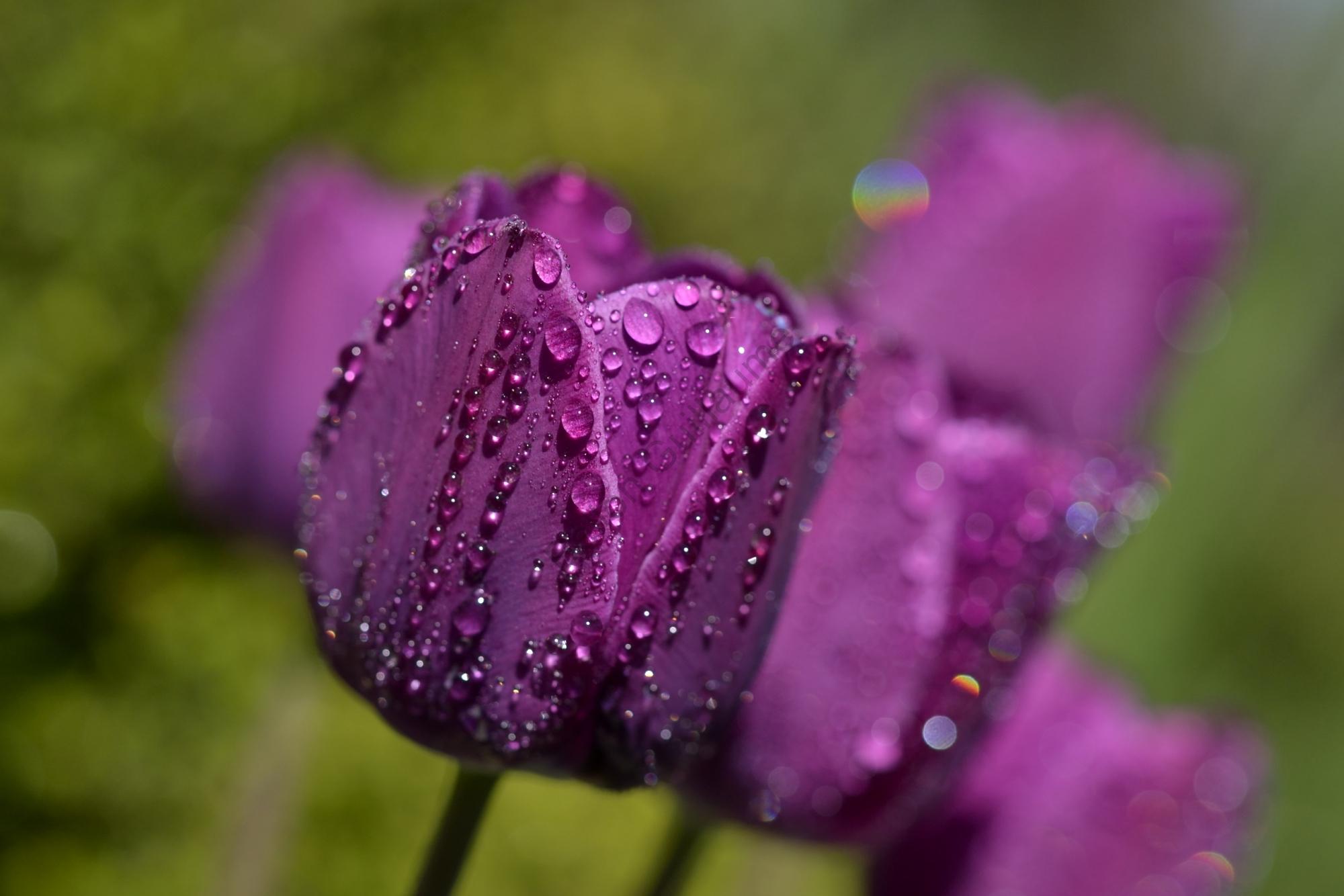 Fleurs changement de site internet for Site de fleurs